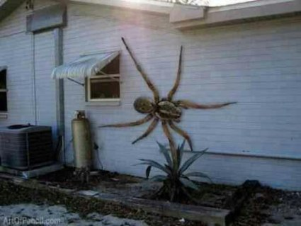 Angolski veštičiji pauk. Da li postoji zapravo ili ne?
