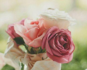 Buket ruža od belih i roze