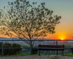 Činjenice o prirodi Srbije - Drvo i zalazak sunca