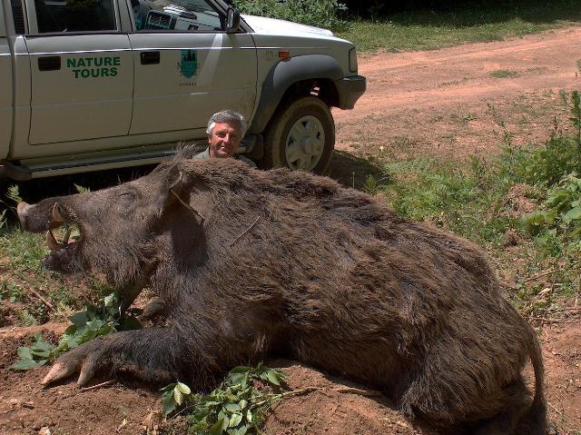 Lovac je ulovio ovu neverovatnu divlju svinju koja teži čak 162kg. Ili da li je?